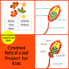 parts of a leaf project for kids