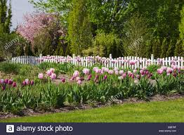 Tulips And A White Picket Fence In A Landscaped Residential Front Yard Garden In Spring Quebec Canada Stock Photo Alamy