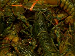 LaurentGras: Lobster, The Cooking Process