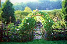 beautiful vegetable garden infobarrel
