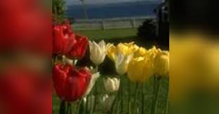 Ida Butler Obituary - Visitation & Funeral Information