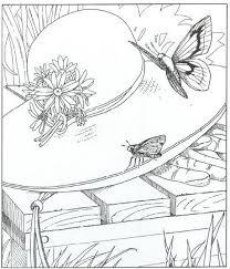 Kleurplaat Natuur Rondom Het Huis Vlinders Kleurplaten Prinses