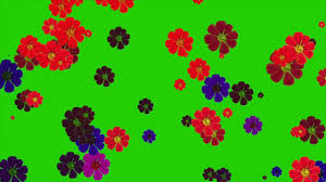 colorful flowers falling green