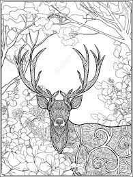 Coloring Page With Deer In Forest Coloring Book For Adult And