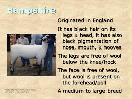Daily Food for Thought 1 Why do animals have different breeds? - ppt  download