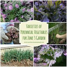 perennial vegetables for zone 3 garden