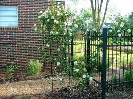 picture metal garden trellis ideas