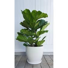 white ceramic plant pot with saucer
