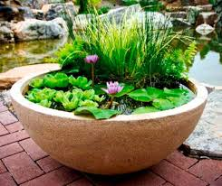 pond in a pot create a container water