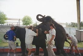 「動物サーカス 舞台裏」の画像検索結果
