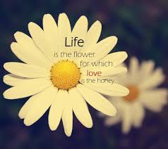 flowers quotes flowers sayings flowers picture quotes