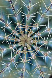 Resultado de imagen de Simetría completa