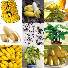 Mini Banana Seeds Dwarf Banana Tree Seed Bonsai Rare Fruit Seeds ...