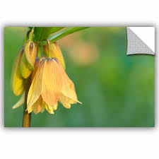 Ebern Designs Frittillaria Removable Wall Decal Wayfair