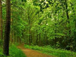 forest hd wallpapers nature