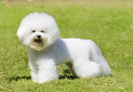 the cutest dog breeds that you