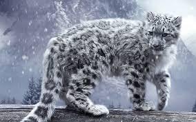 mac os x snow leopard wallpaper hd 60