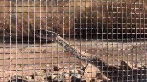 Snake Fence Demonstration Youtube