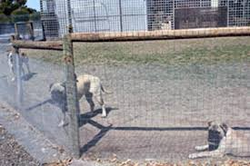 Blog The Fencing Store Latest News Product Info Building A Snake Proof Fence
