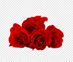 love rose flower smile happiness