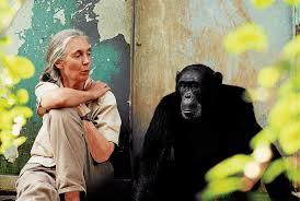 انسانها قادر به درک اطلاعات رفتاری از صدای شامپانزه ها  واژگان صوتی شامپانزه ها