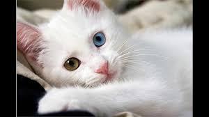 صور قطط كيوت جمل قطط مضحكة 2017 قطط مضحكة جدا أحلى صور لأجمل