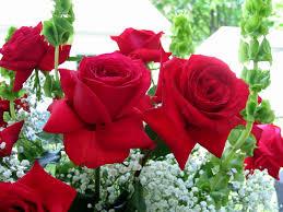 ورد بلدي صور لاجمل نوع من الزهور صور حب