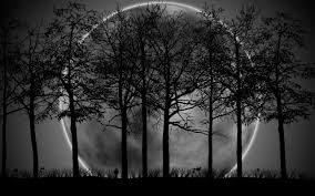 dark forest moon hd wallpaper