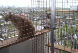 Enclosures Help Cats Adjust To Balconies The Star