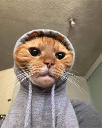 Image result for pets looking cool cats