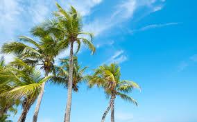 تحميل خلفيات جزيرة استوائية النخيل جوز الهند على شجرة النخيل