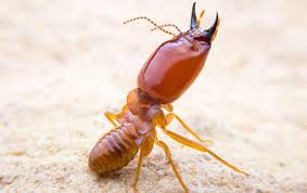 14+ Home Termite Inspection  Background