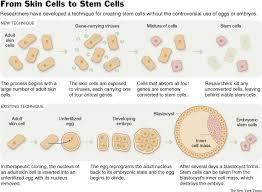 Image result for Skin Cell