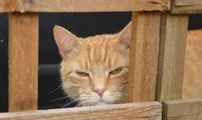 Ecofective Cat Dog Repellent Review Mandycanudigit
