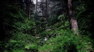 nature trees dark forests wallpapers