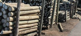 Treated Poles For Sale High Quality Sabs Approved Treated Poles