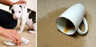carpet cleaning albertapro cleaning