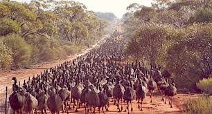From Australia To Africa Fences Are Stopping Earth S Great Animal Migrations