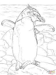 Macaroni Pinguin Droogt In De Zon Kleurplaat Gratis Kleurplaten