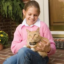 In Ground Cat Fence By Petsafe Pcf 1000 20