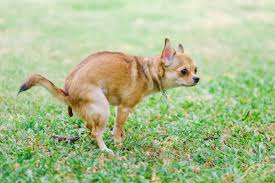 keep dogs from ing on your lawn