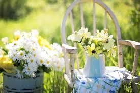 langkah menanam bunga aster