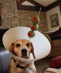 pet cones that your pet will