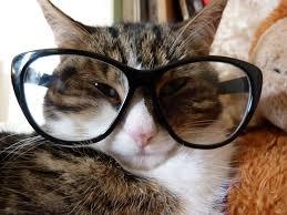 قطط مضحكة احلى قطة مهضومة عالم ستات