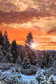 canada clouds forest trees snow