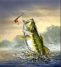 cool fishing wallpapers on wallpapersafari
