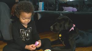 Colorado Springs family adopts dog through the Stink Bug Project