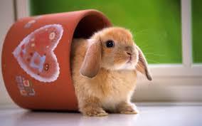 صور ارانب مضحكه
