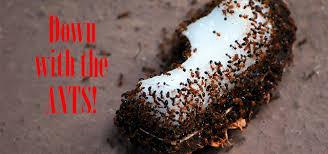 effective diy ant