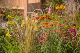 hot border planting ideas in the